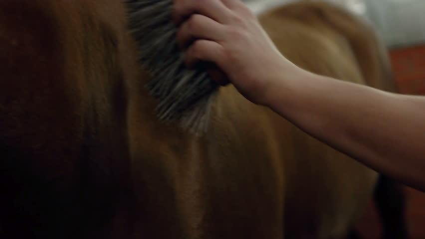 Men grooming brown horse hair. Grooming a horse. Close up.