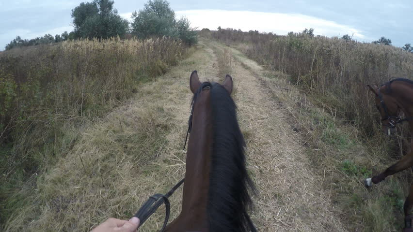 First person view of riding a horse. Point of view of rider walking at stallion at nature. Pov motion. Close up | Shutterstock HD Video #24678719