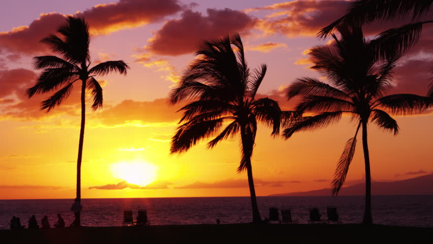 Shore Palms Tropical Beach 4k Hd Desktop Wallpaper For 4k: Tropical Sunset With Palm Trees Silhouette At Beach, Woman