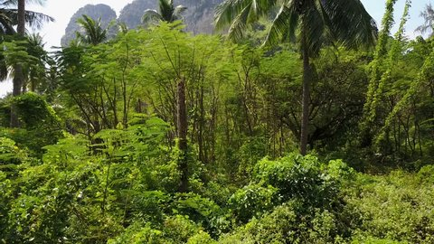 Jungle Aerial view . Panorama landscape with beautiful tropical forest, high cliffs, jungle and blue sky. Krabi province, Thailand