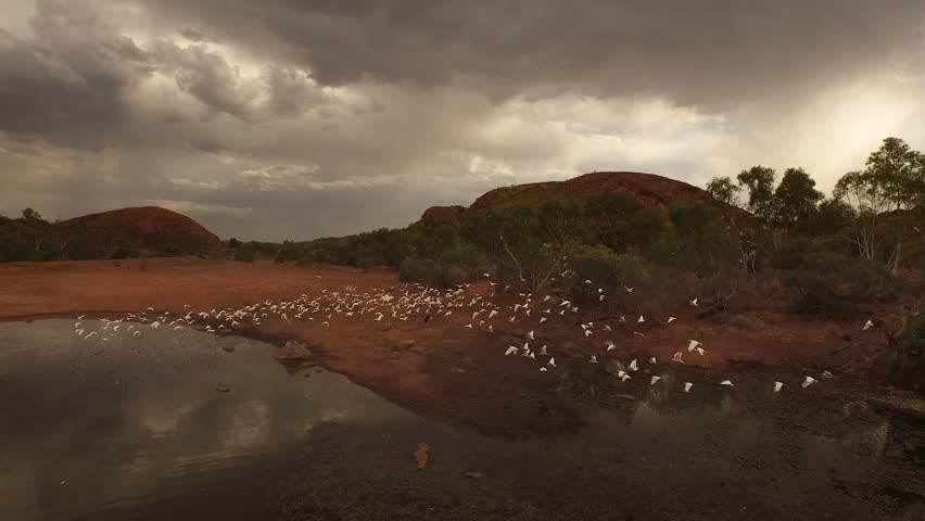Cockatoos fly around an outback waterhole near Marble Bar in the Pilbara region of Western Australia, Australia.