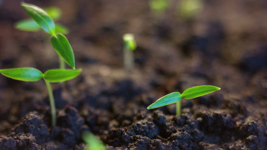 Growing Plants Time Lapse Growth Concept, Animated Green Sun Rays, Alien Planet Sunrise Germination Seeds
