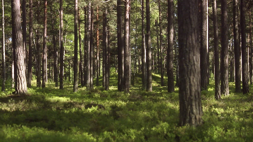 Stream Water In Coniferous Forest Tilt Camera Movement Stock ...