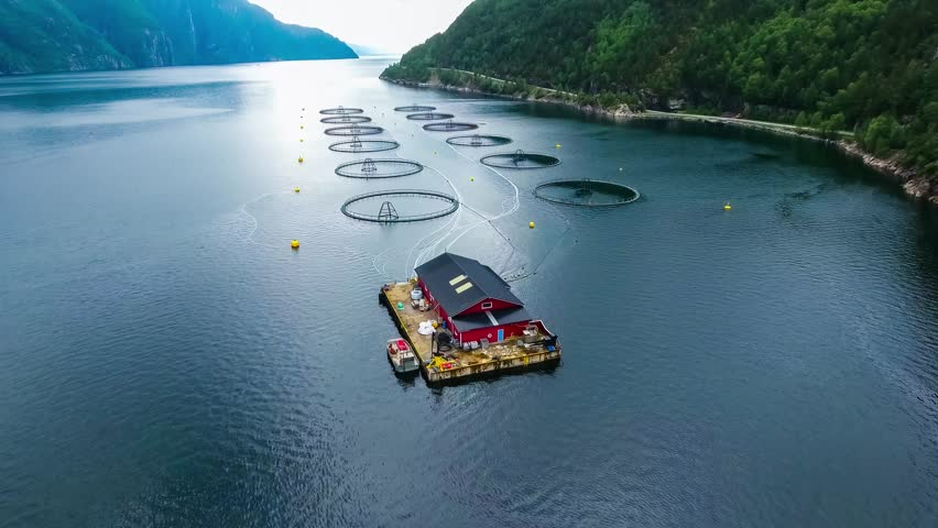Aerial footage Farm salmon fishing in Norway