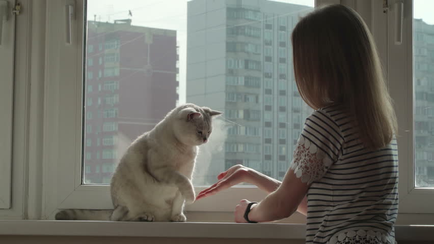 Young blonde girl talking to the cat and asked for his paw on a windowsill. The cat do not like and he suffers.