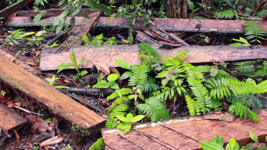 Debris left by timber traffickers in the rainforest in the Ecuadorian Amazon