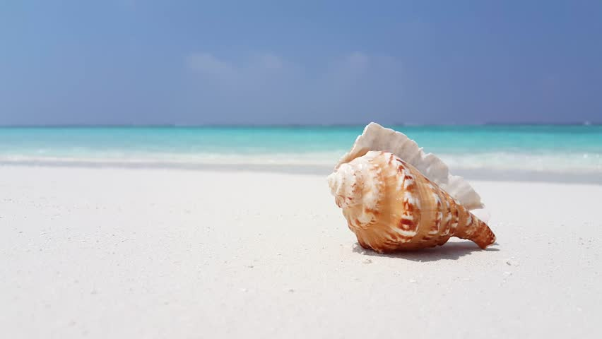 Image result for maldives shell beach