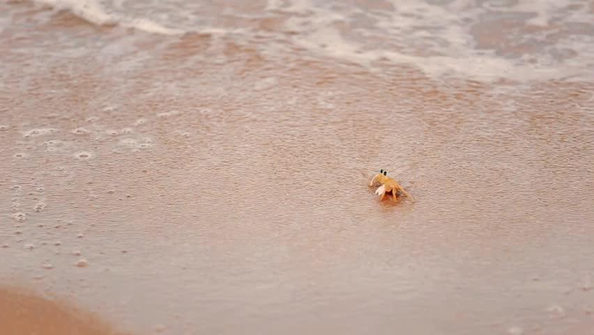 Header of crab