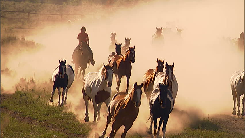 Cowgirl drives herd of horses down a country lane