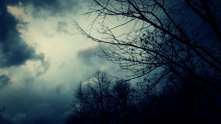 Leafless trees silhouetted and blowing in the wind. Storm sky.