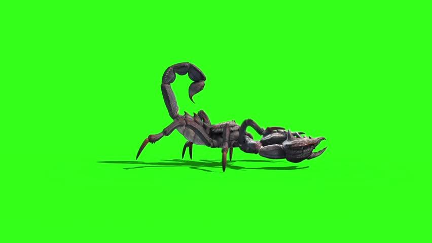 Animal Scorpio Walk Loop Side Green Screen 3D Rendering