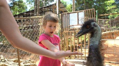 Little Girl Feeding Ostrich