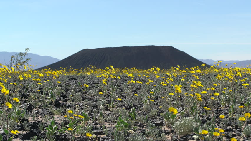 Zoom Out - Wild Flowers and Amboy Crater - Amboy California