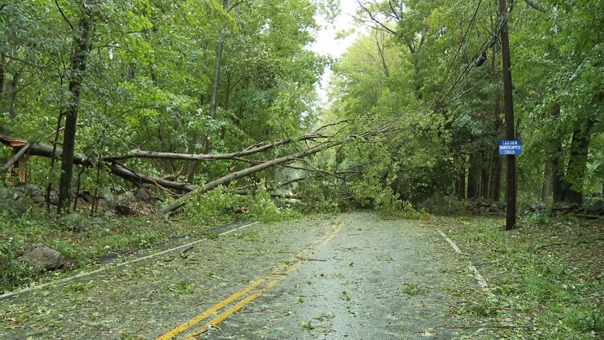 Storm damage -- downed trees blocking road