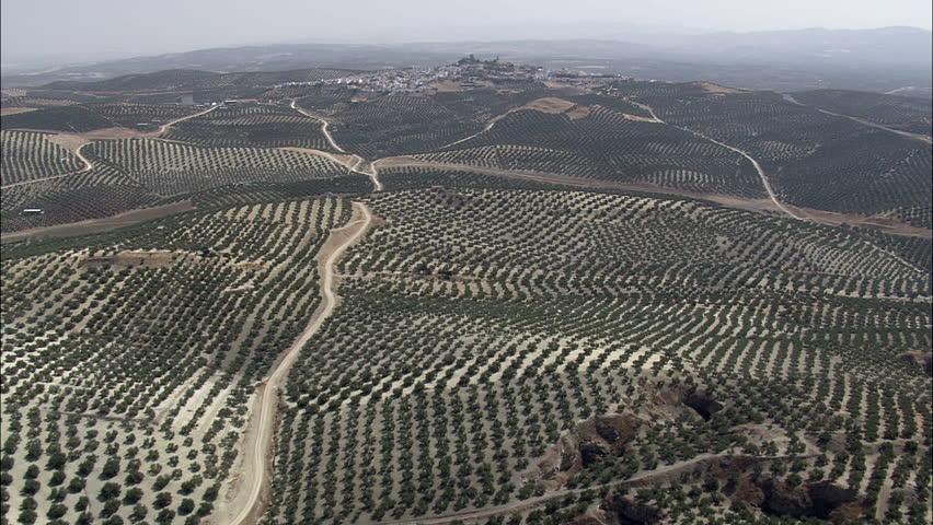Espejo Surrounded By Olive Groves Spain, Espejo, Cordoba-2007 | Shutterstock HD Video #25545989