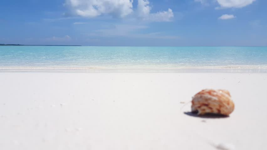 v01731 Maldives beautiful beach background white sandy tropical paradise island with blue sky sea water ocean 4k hermit crab