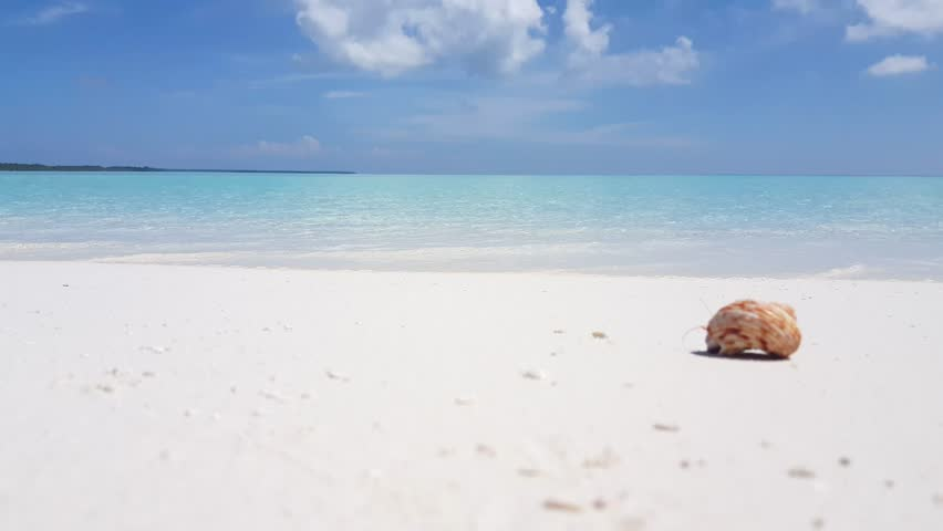 Tropical Island Beach Ambience Sound: Sand Or Ghost Crab (Ocypode Quadrata) Coming Out From His