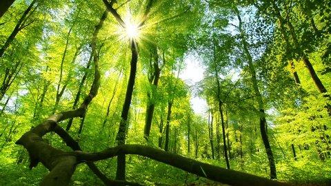 Enchanting sun rays beautifully illuminating a beech forest in vivid shades of fresh green at spring, slow dolly shot