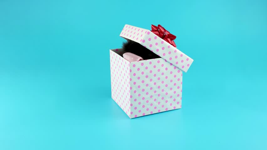 Little Kitten With Bow Get Out From The Gift Box Stockvideos ...