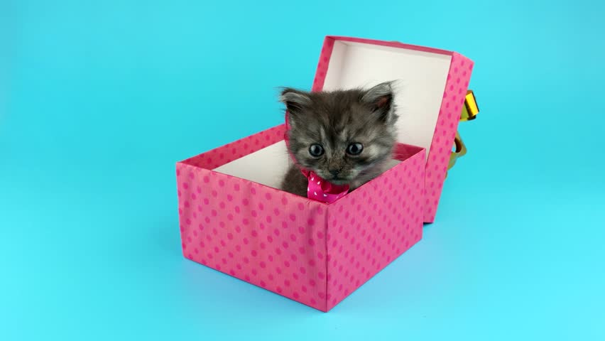 Cute Little Cat With Red Bow, Get Out From The Gift Box, Isolated ...