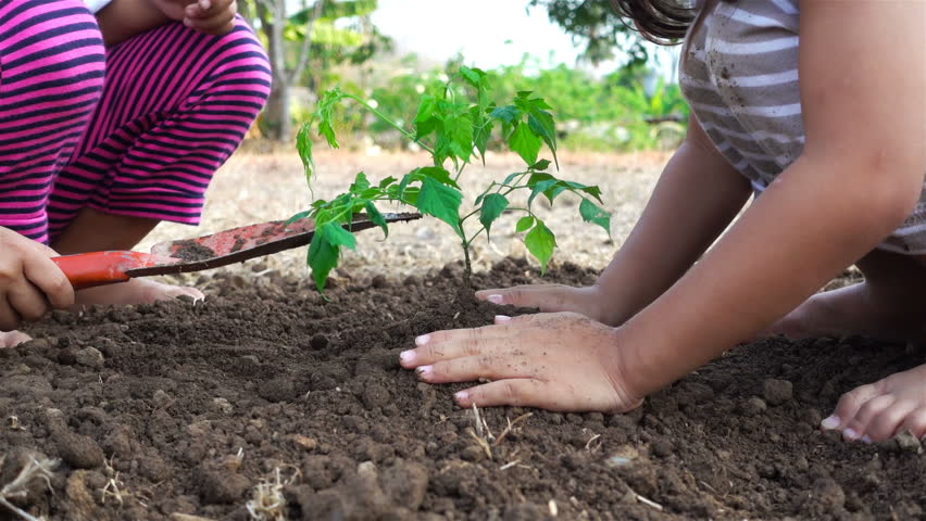 Asian little girl plant a tree at the ground, slow motion. Ecology concept. Part 3 #25931234