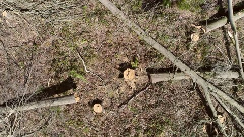 Aerial top down view drone moving up fast showing more and more of dead forest wasteland cut tree trunks all over place laying on dead ground sad view of destroyed nature ecology habitat destruction