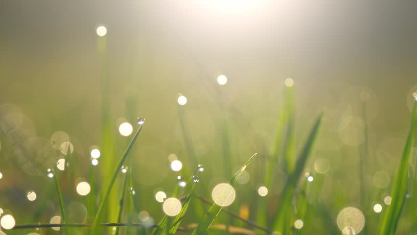 Abstract shot of wet green grass with dew drops in morning lights | Shutterstock HD Video #26173850