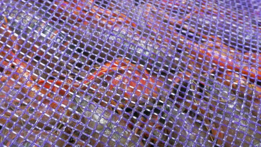 Freshly Caught Craw Fish Swim Stock Footage Video (100% Royalty-free)  26389319 | Shutterstock