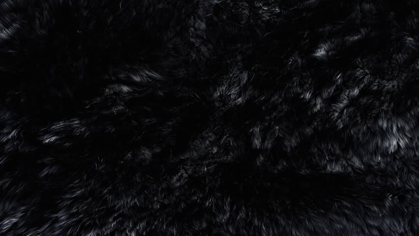 Beautiful black fur blowing on the wind, luxury abstract natural animation, close up macro shot of animal hair in slow motion.