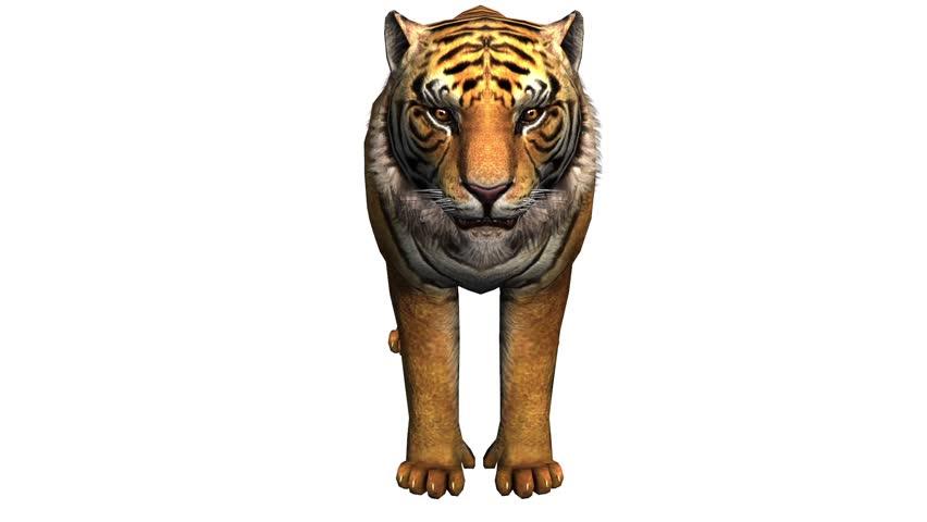 Tiger eat feeding,wildlife animals habitat. cg_02021