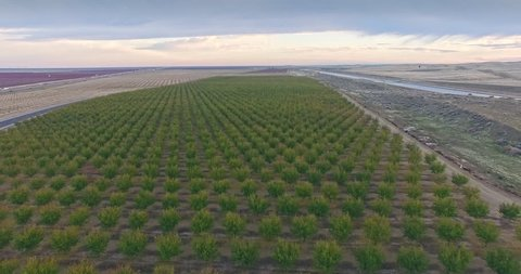 Aerial of Farming Almond pistachio trees Crops Field Vegetation Agricultural