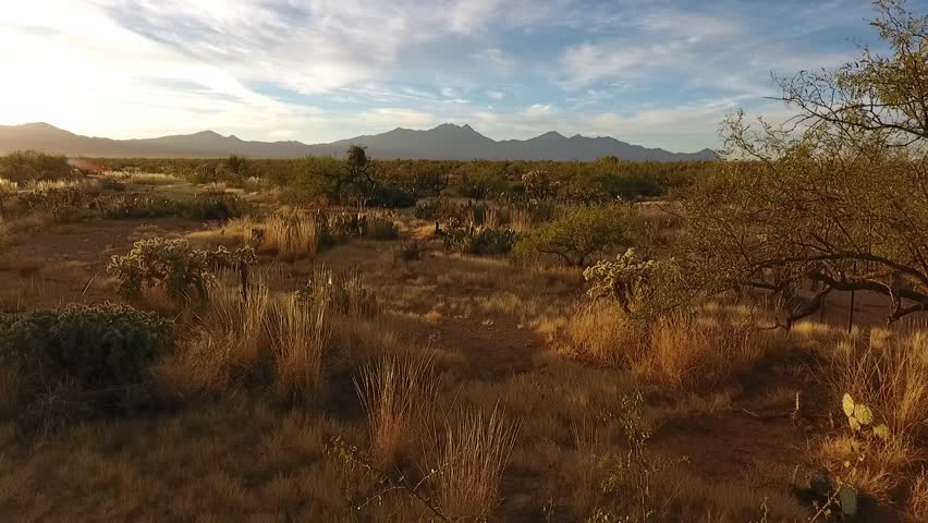 Low aerial of desert vegetation with distant mountains