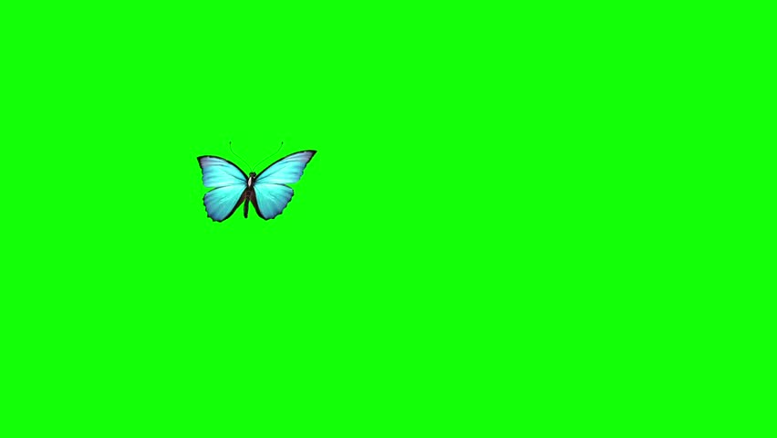 Blu Butterfly Flies Green Screen 3D Rendering Animation