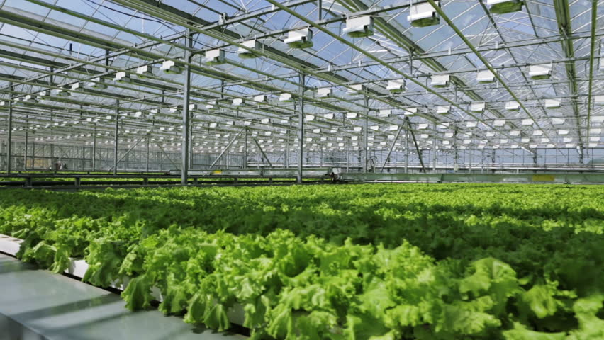 Growing Herbs And Vegetables In The Greenhouse Stock Footage Video 2694239  | Shutterstock
