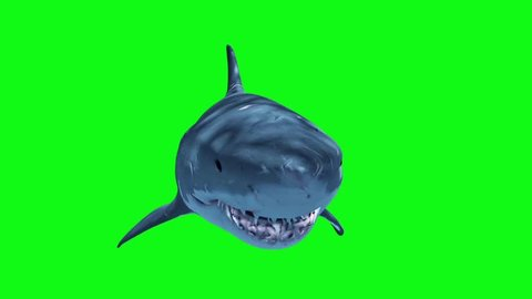 White Shark Attack Loop Front Green Screen 3D Rendering Animation
