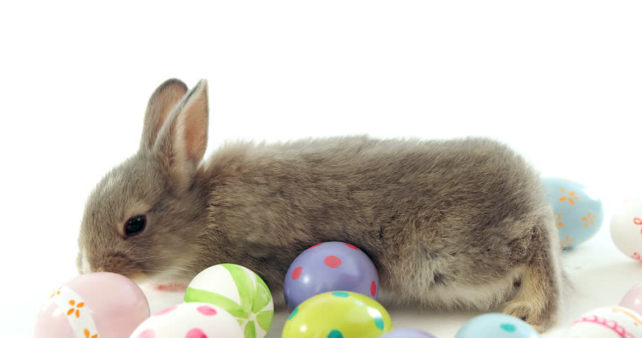 Easter Eggs And Easter Bunny Stock Footage Video (100