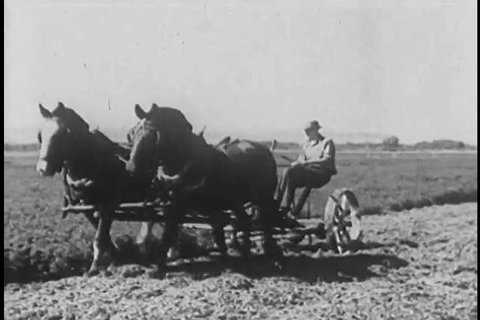 1920s: Farmers use mechanized plows and horses to tend the land holding their legume crops in the 1920s.