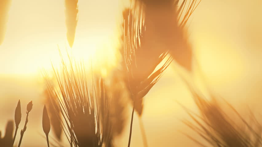 Grass sunset | Shutterstock HD Video #2718089