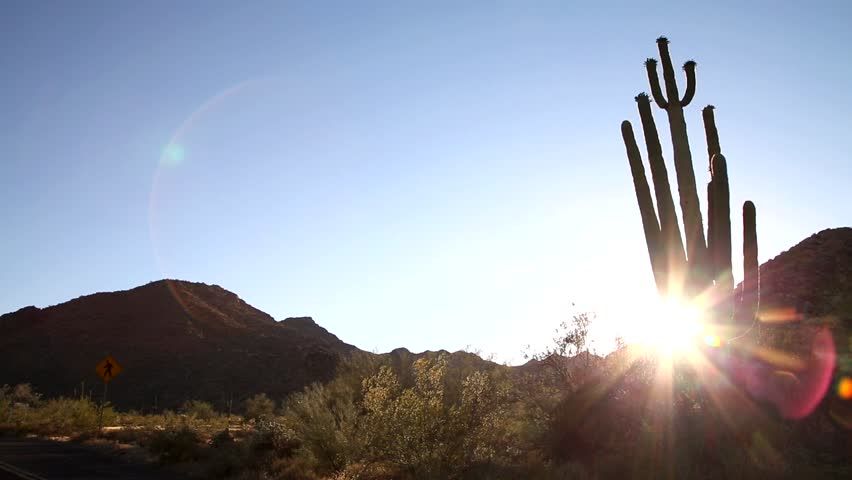 Saguaro Cactus- Sunset in the Desert. The Saguaro is a cactus species which can grow to be over 70 feet (21 m) tall. It is native to the Sonoran Desert in Arizona, parts of Mexico and California.