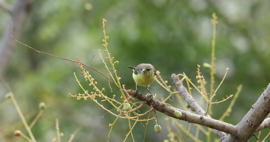 Bird on the Tree | Shutterstock HD Video #27403399
