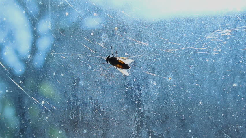Disgusting gadfly sitting on dirty glass, complete devastation and insanitary | Shutterstock HD Video #27548047