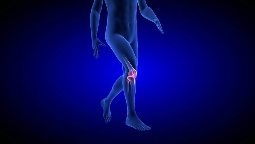 4k0019knee Pain Animation Blue Human Anatomy Body 3d Scan