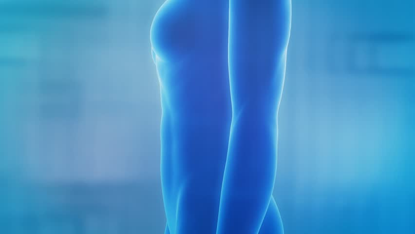 Female Guts Stomach Anatomy In Blue goes from inflamed to healthy