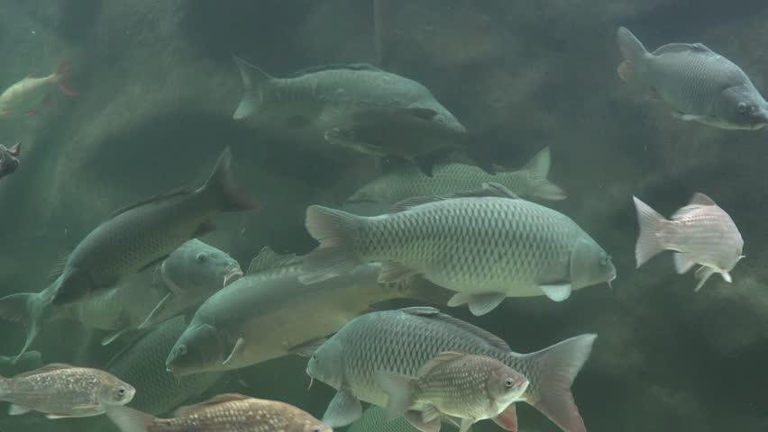 Many fish swimming undersea   Shutterstock HD Video #27702769