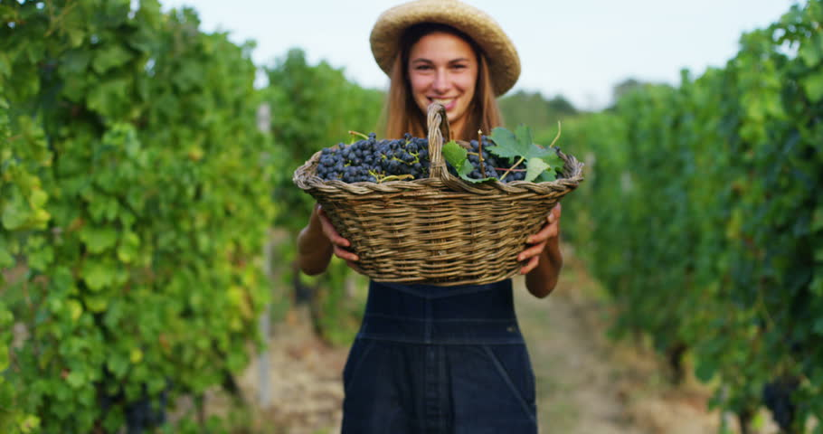 Beautiful girl farmer (woman) brunette holding a basket with purple grapes, in a straw slag laughing smiles, on a grape field. Concept wine making, plantation, summer, autumn, fresh fruit, bio ecology