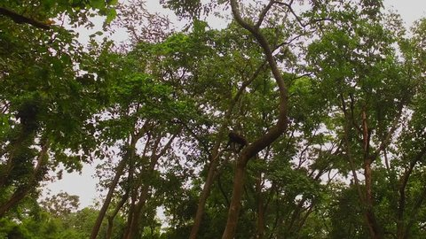 Rainforest Africa, Virunga national park, Democratic republic Congo