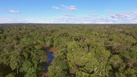 Rising fast over a large expanse of pristine tropical rainforest, intact to the horizon, on a sunny evening over the Rio Shiripuno, a tributary of the Amazon in Ecuador.