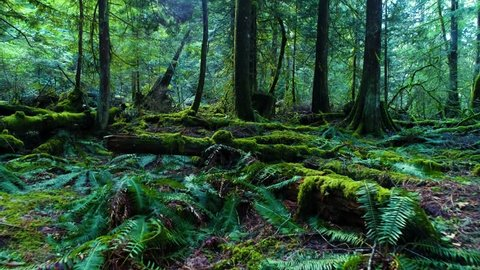 Canada Moss and Fern Covered Forest Floor