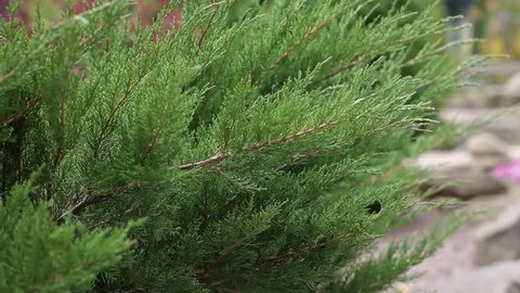 Evergreen Tui plants, landscape design, nature