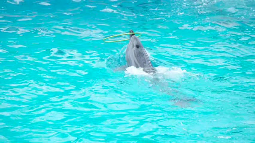 Dolphin and a hoop in the water | Shutterstock HD Video #28107919
